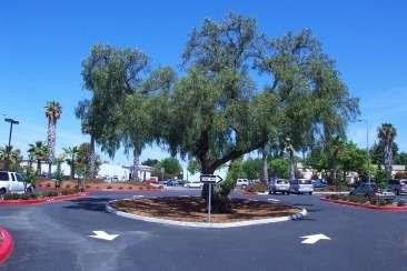 Maintenance Center Pepper Tree
